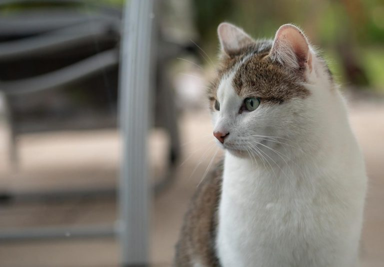 Korzystanie z siatki zabezpieczającej dla kota